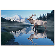 Printed Art Animal Reflections Of Glacier by Gordon Semmens