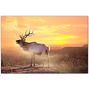 Printed Art Animal Elk Sunrise In The Badlands by Gordon Semmens