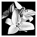 Hand-painted Oil Painting Black and White Floral 1210-FL0004